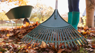 Top gardening tips this autumn