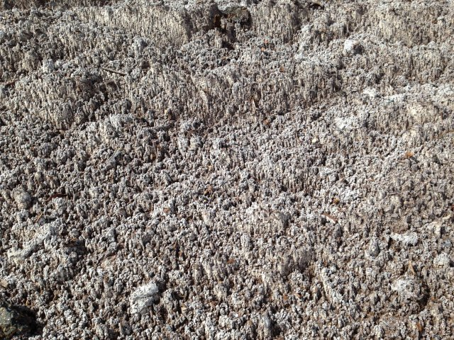 Buy Rock Salt | Dorset Delivery or Collection