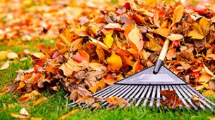 How to get your garden ready for autumn