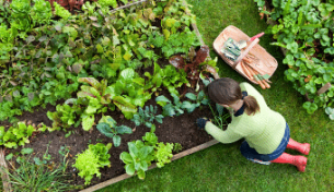 Tips for starting your garden vegetable patch